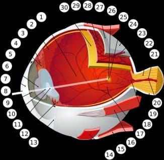 деструкция стекловидного тела, деструкция стекловидного тела глаза, деструкция стекловидного тела глаза чем опасно, деструкция стекловидного тела лечение, деструкция стекловидного тела глаза найдено решение, деструкция стекловидного тела глаза лечение,