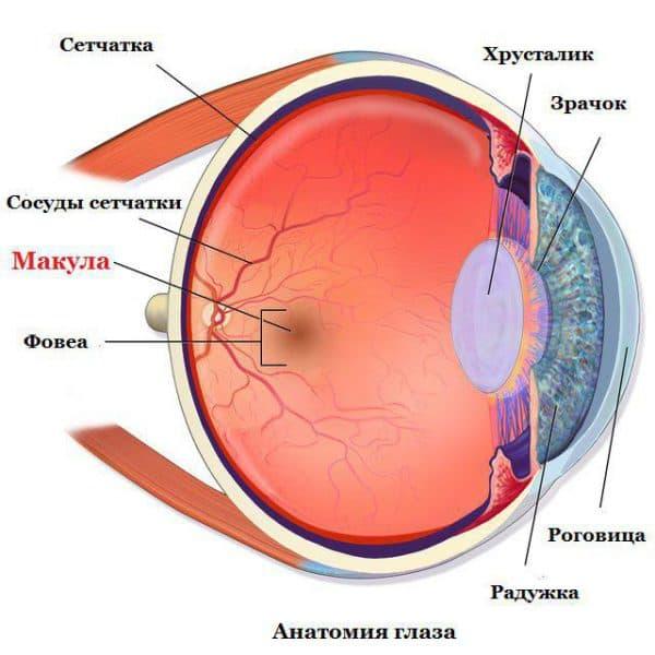 отслойка сетчатки глаза, изображение на сетчатке глаза, заболевания сетчатки глаза, как лечить глаза, болезни сетчатки глаза, лечение сетчатки глаза, макулодистрофия сетчатки глаза, строение сетчатки глаза, сетчатка глаза лечение народными средствами