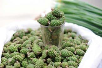 sosnovym-zelenym-shishkam