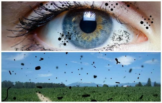 Помутнение стекловидного тела глаза лечение народными средствами