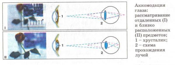 близорукость и дальнозоркость что это такое, как возникают близорукость и дальнозоркость, регулируемые очки для коррекции близорукости и дальнозоркости, близорукость и дальнозоркость одновременно, дальнозоркость и близорукость отличие, что такое близорукость и дальнозоркость википедия, чем отличается близорукость от дальнозоркости, подбери признаки дальнозоркости и близорукости,