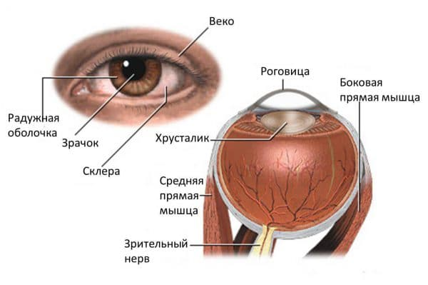 глаукома причины симптомы лечение и профилактика, глаукома симптомы, глаукома лечение, глаукома глаза что это такое, глаукома лечение народными средствами, глаукома симптомы и лечение,