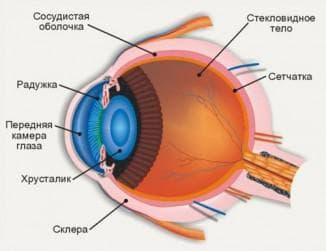 анатомическое строение глаза