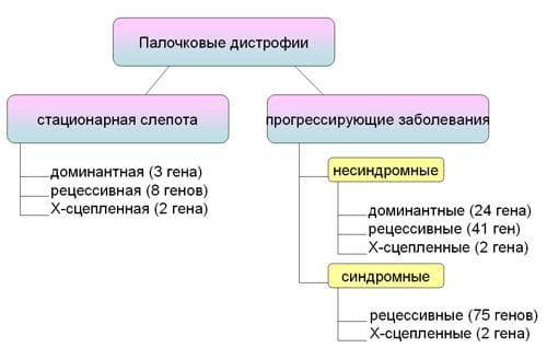 Гены дистрофии сетчатки