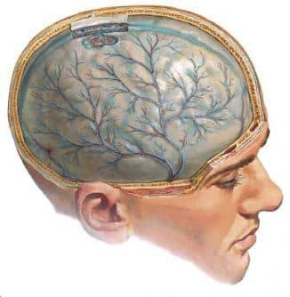 otek-mozga