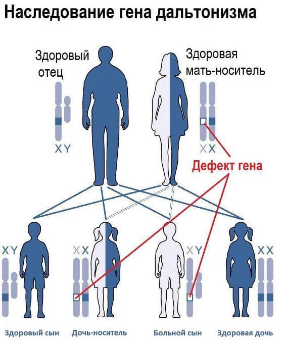 nasledovanie-gena-daltonizma