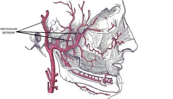 visochnyj-arteriit
